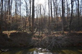 The view up the 200-foot buffer by the existing quarry.